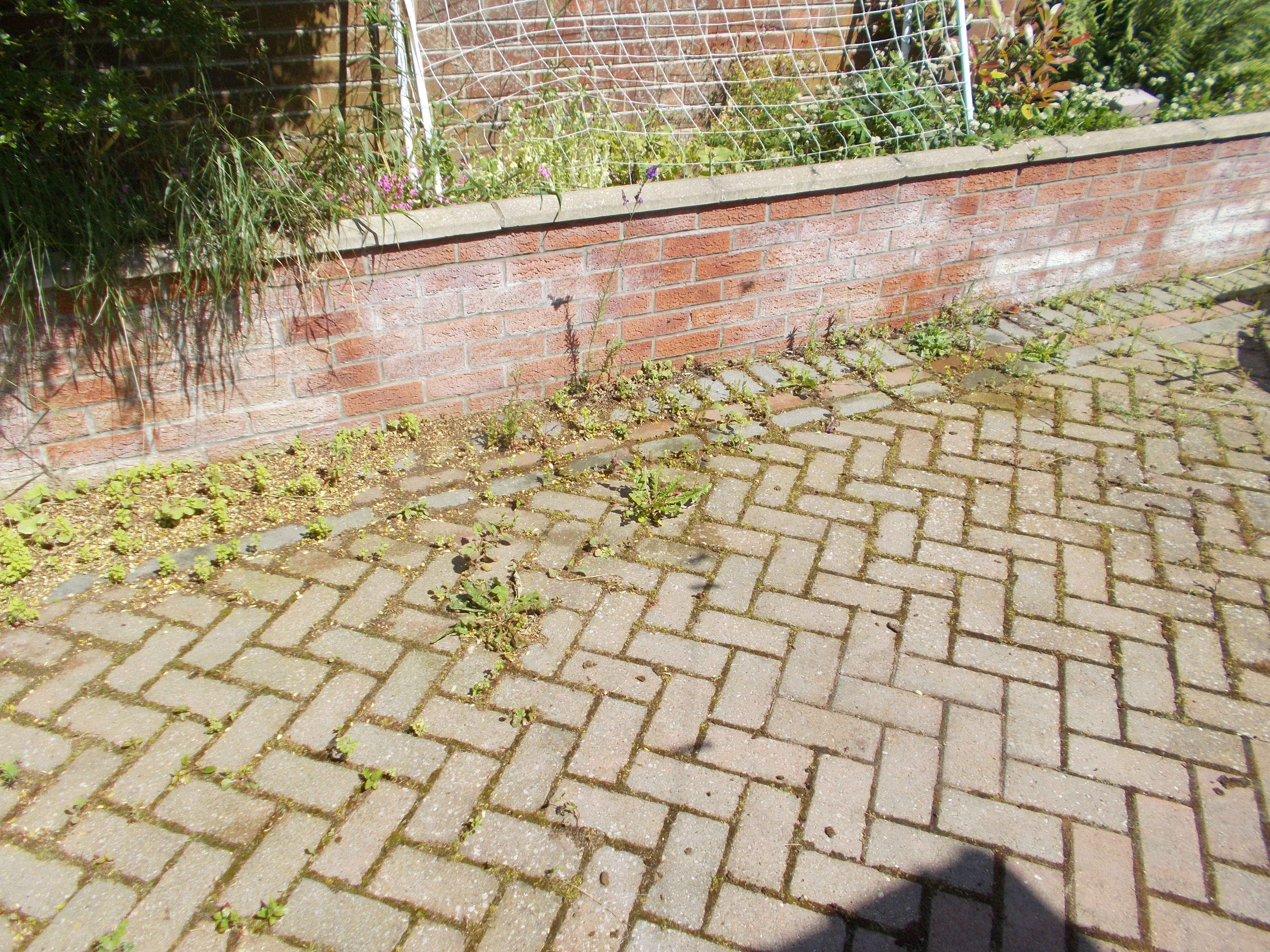 block paving covered in weeds